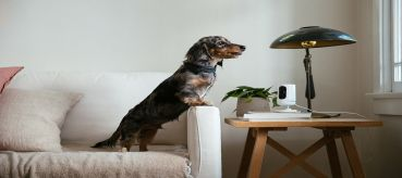 Keep your furry friends safe! Here are the Best Pet-Friendly Home Security Systems